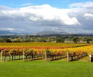 greenstone vineyard
