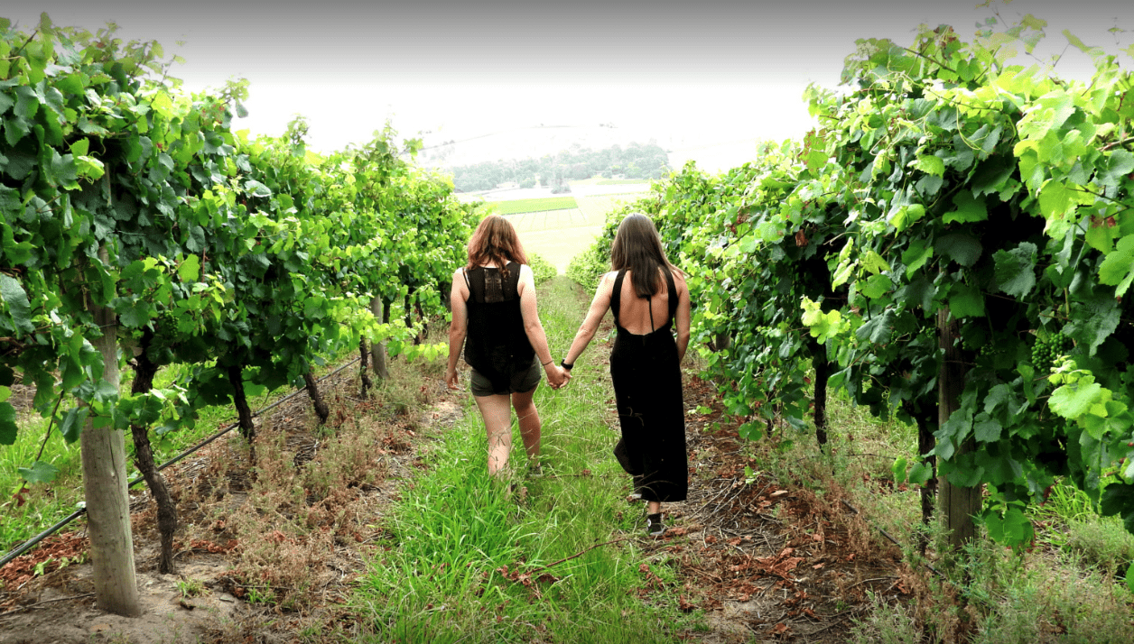 Evergreen Winery Tours in Healesville VIC
