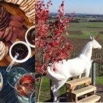 wine buffs luxury yarra valley tour