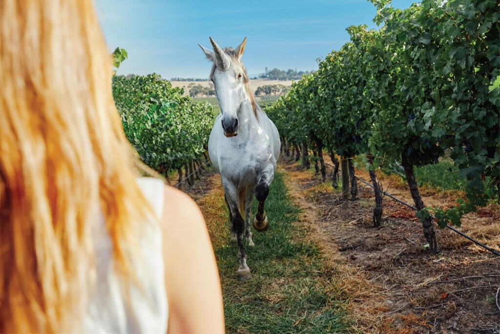 helen and joeys estate unicorn wines